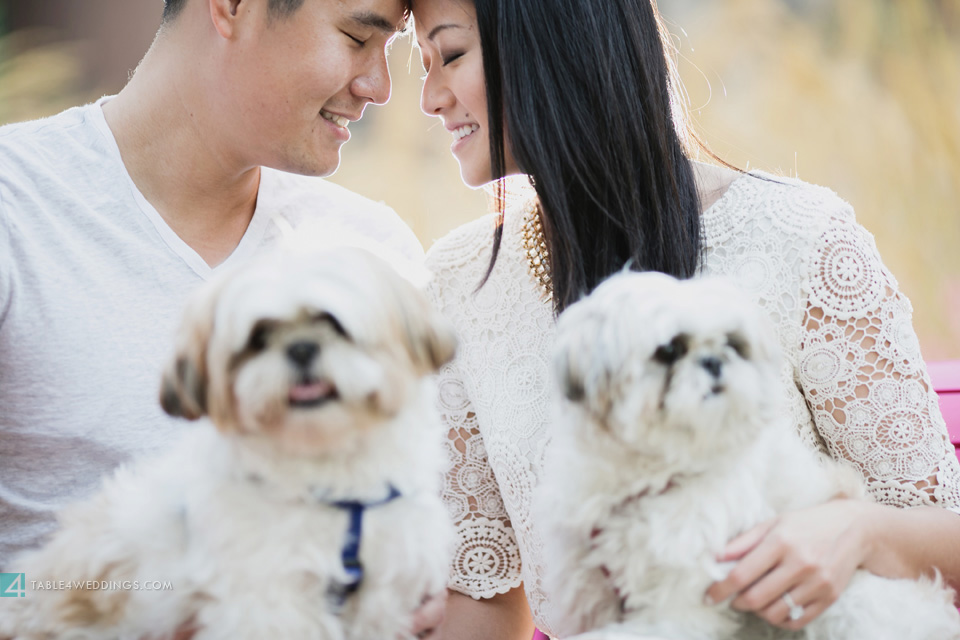 021 table4 best of 2013 engagement photos maltese dogs